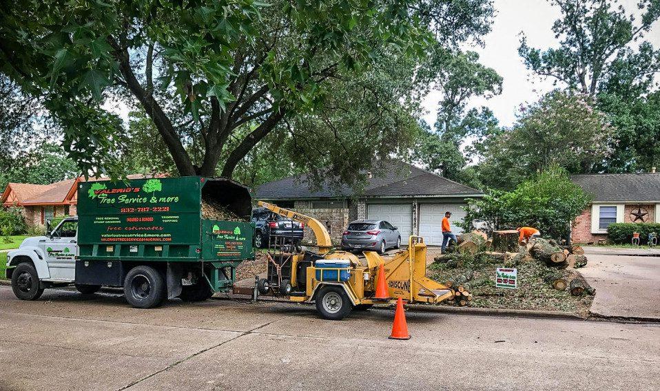 houston tree removal