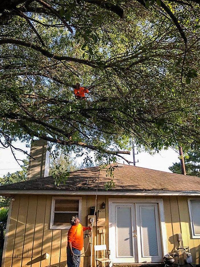 Uplifting Tree Service