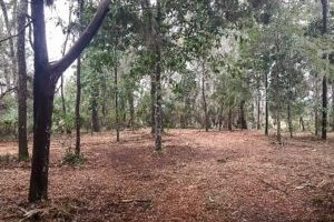 Land Clearing and Brush Grinding Services