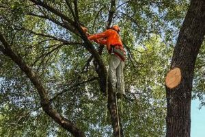 Houston Tree Trimming