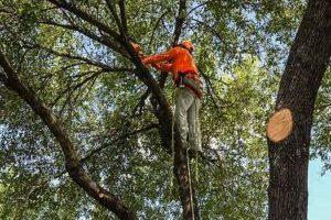 Houston Tree Trimming