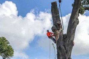 Uplift Tree Trimming
