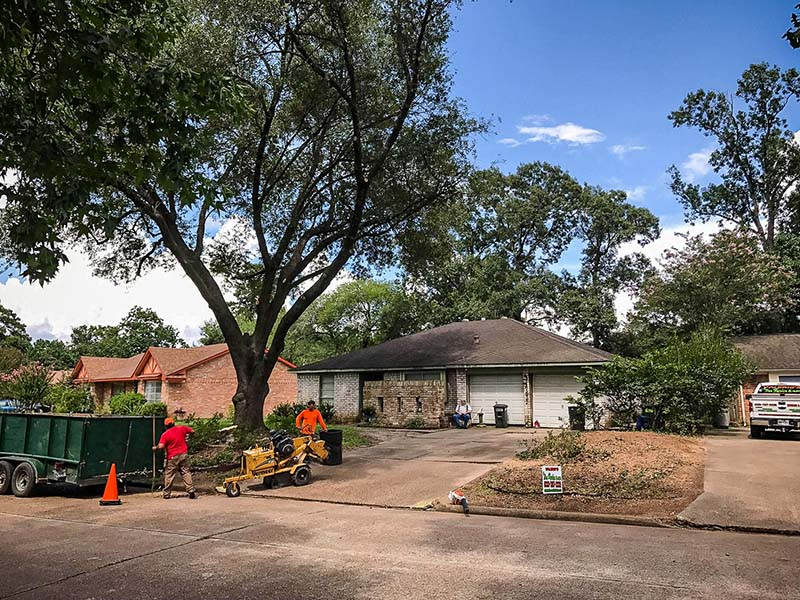 tree service houston tree removal tree trimming