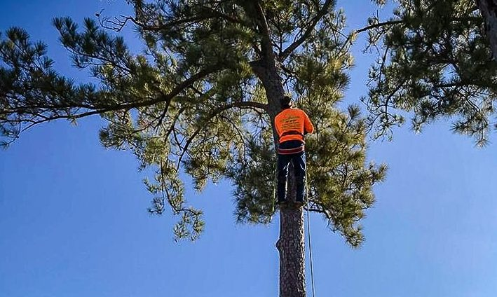 Who Are Arborists and Why Hire Them