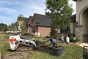 Houston Tree planting service 5