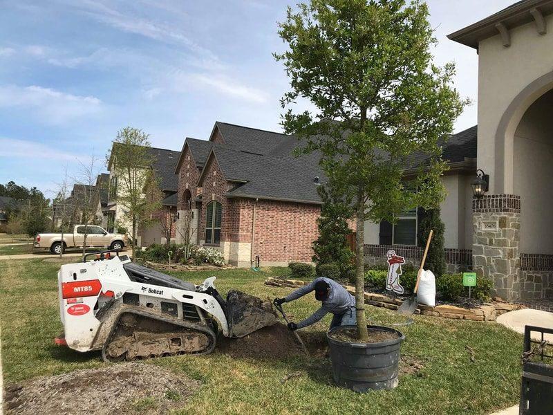 tree service houston tree removal tree trimming