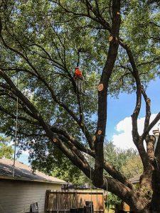 houston tree service tree removal
