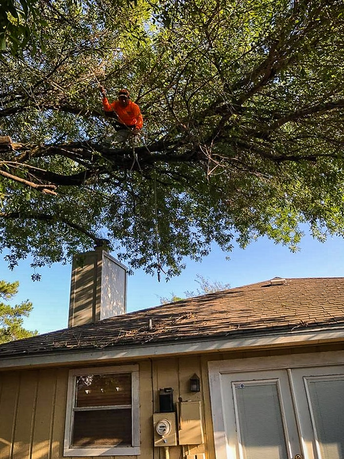 Houston Tree Service / houston tree pruning