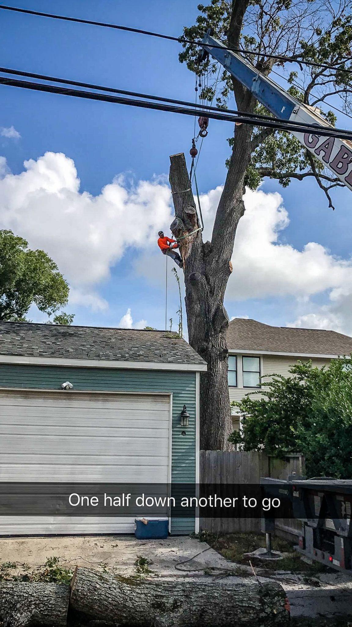 Tree Uplifting Service