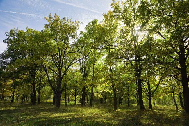 Trimming Tree Service