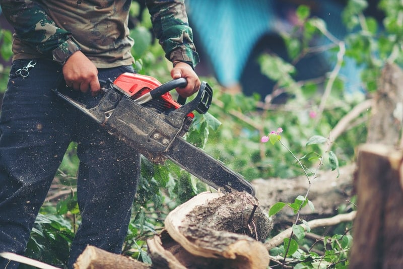 5 Must-Have Tree Trimming Safety Tips / Texas city Tree Service