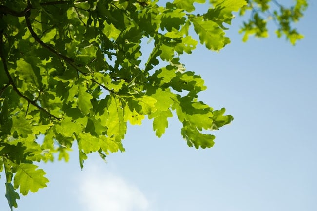 Trees Helpful for Health