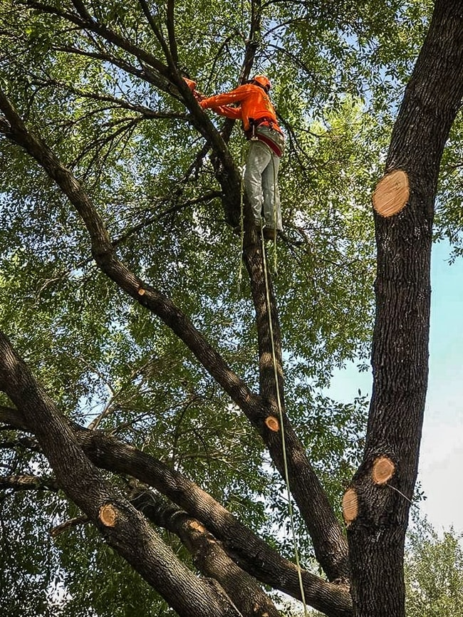 Certified arborists in Houston Texas