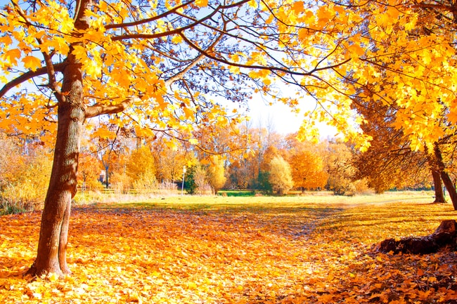 Fall and winter tree care