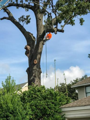 Houston Tree Service
