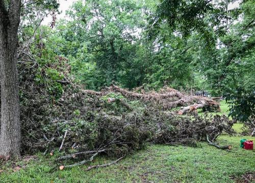Houston Tree Service