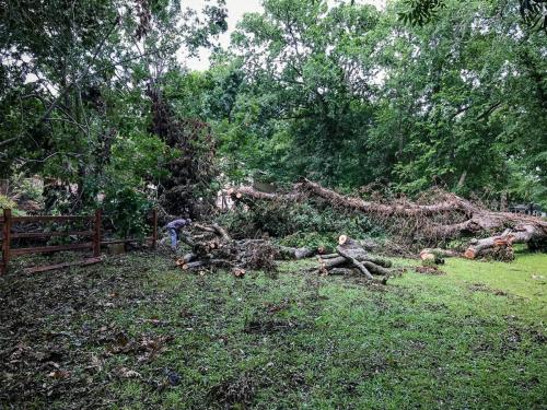 Houston Tree Removal